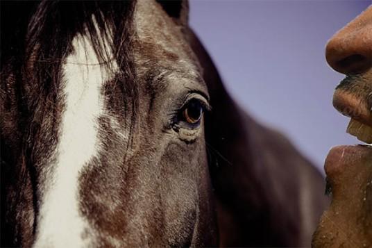 Horse Whisperr