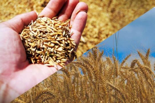 Seedtime & Harvest